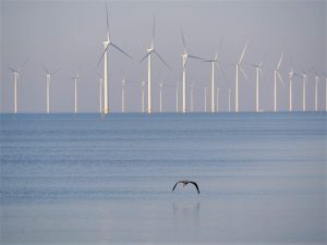 More nature research needed for Hollandse Kust (west) offshore wind farm